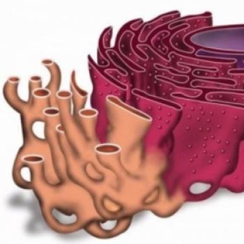 Endoplazmik Reticulum