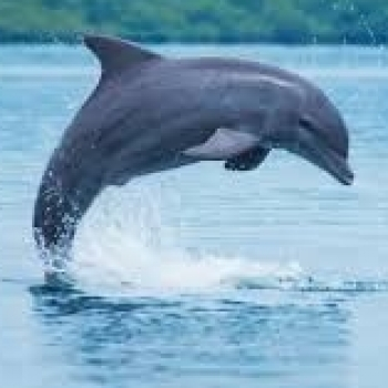 dolphinnsea dolphinnsea
