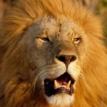 lion heart karaca