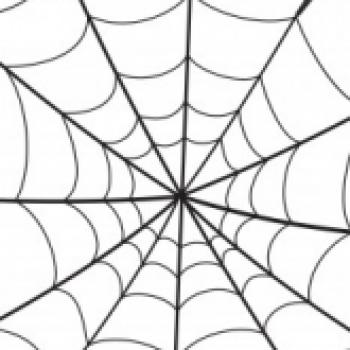 Spider Webb
